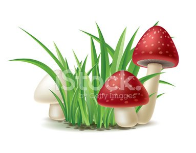 And premium clipartlogo com. Clipart grass mushroom