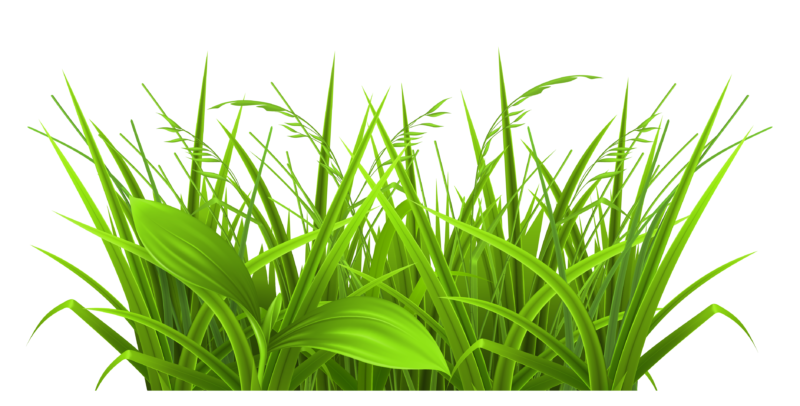 free images photos. Grass clipart outline