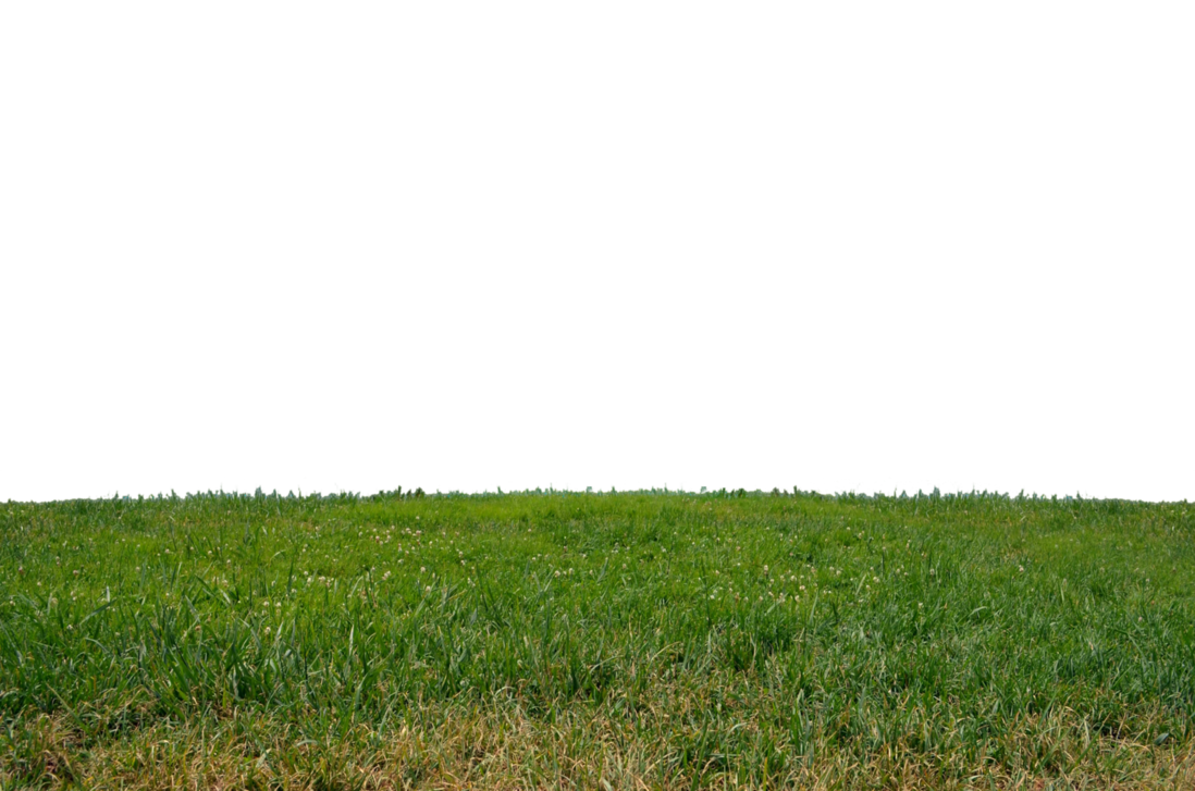 At stock photo png. Clipart park grass