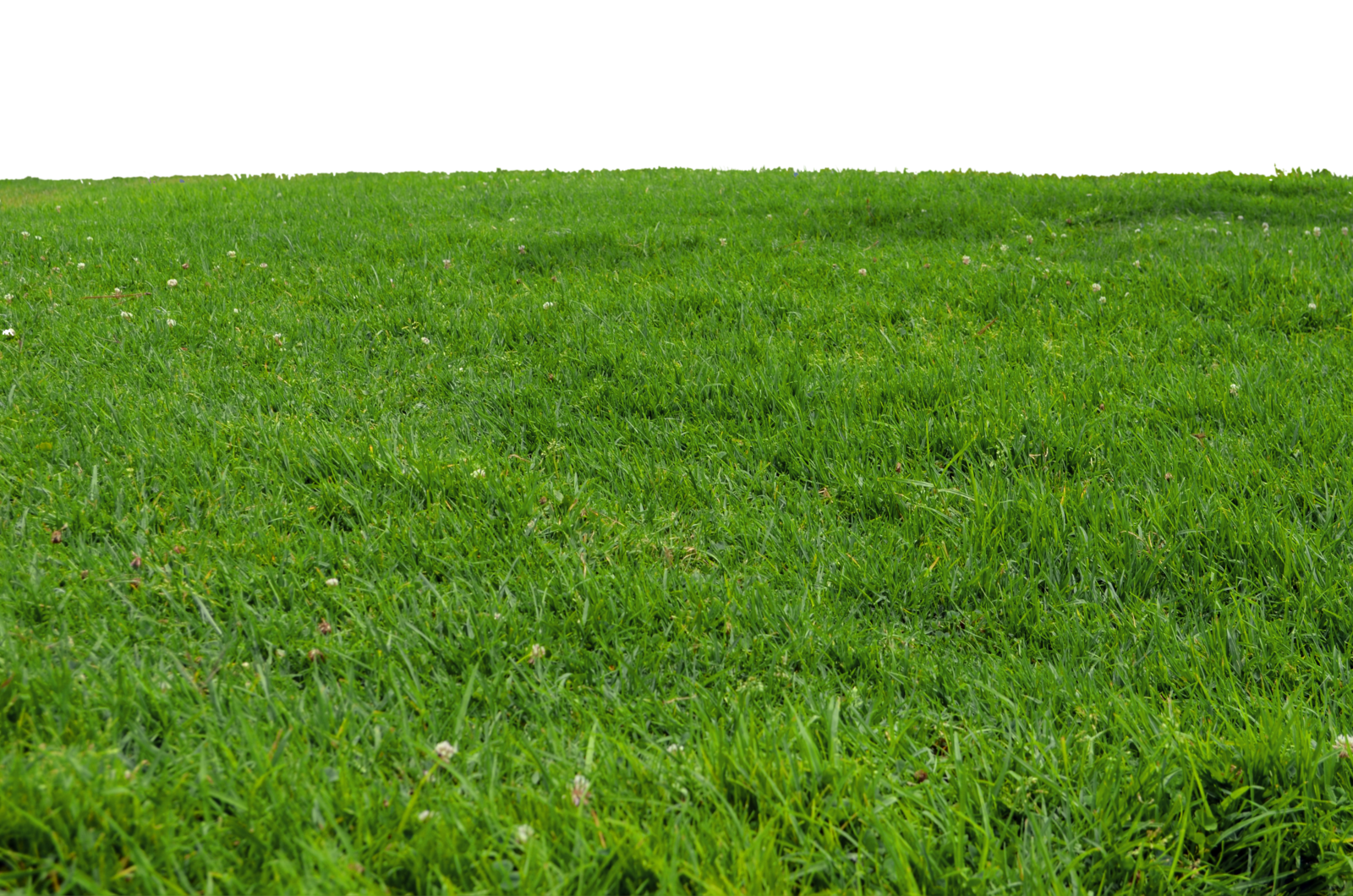 Clipart park grass. At stock photo png