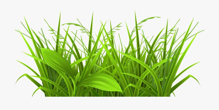 Clipart grass piece. Clip art free cliparts