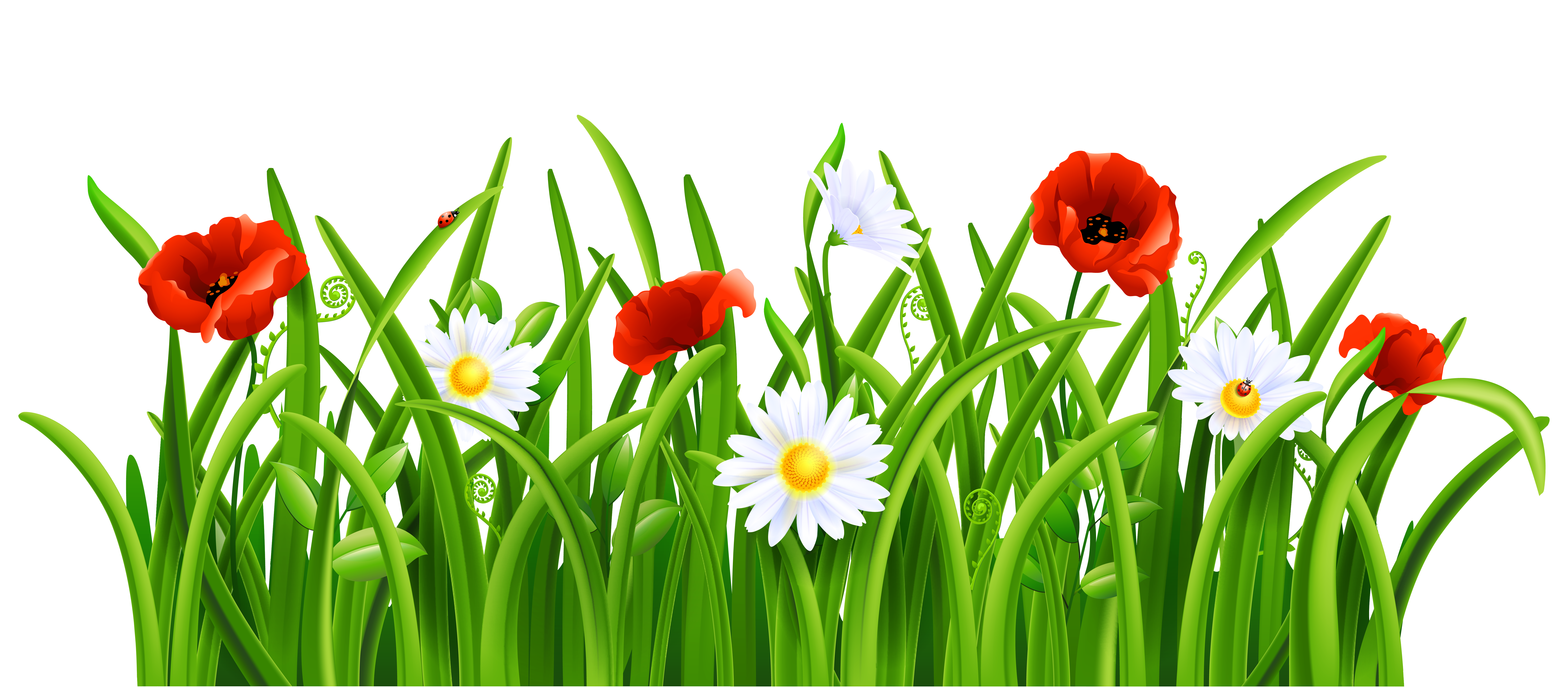 Poppies and daisies with. Poppy clipart grassy