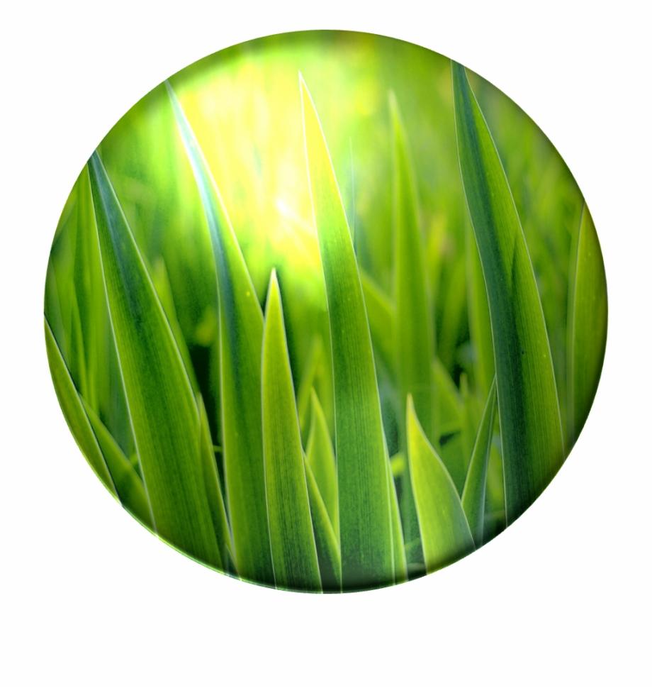 Clipart grass poison. Bulbasaur blades of close