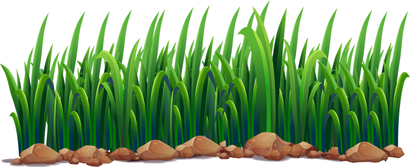 Clipart grass pond. Ecosystem illustration green png