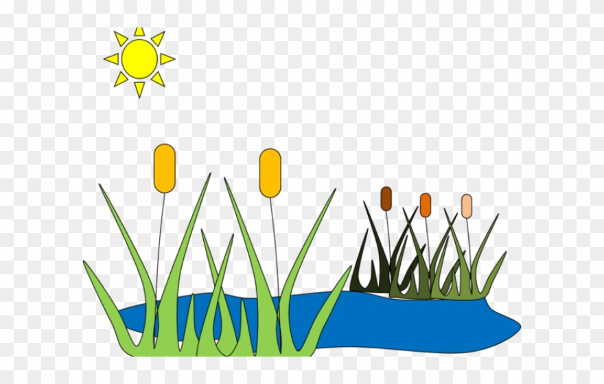 Frog house clip art. Clipart grass pond