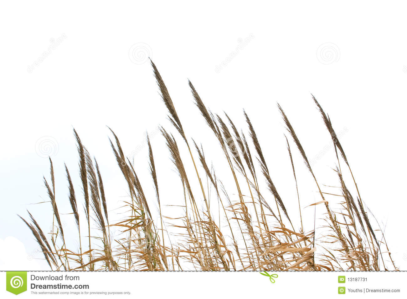 Clipart grass reed grass. Panda free images