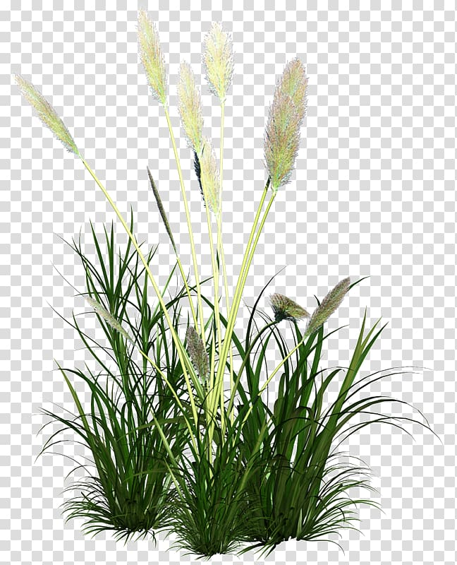 Clipart grass reed grass. Green leafed plant icon