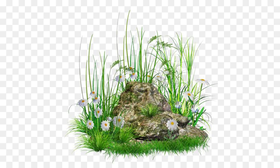 Grass flower plant transparent. Clipart rock lawn