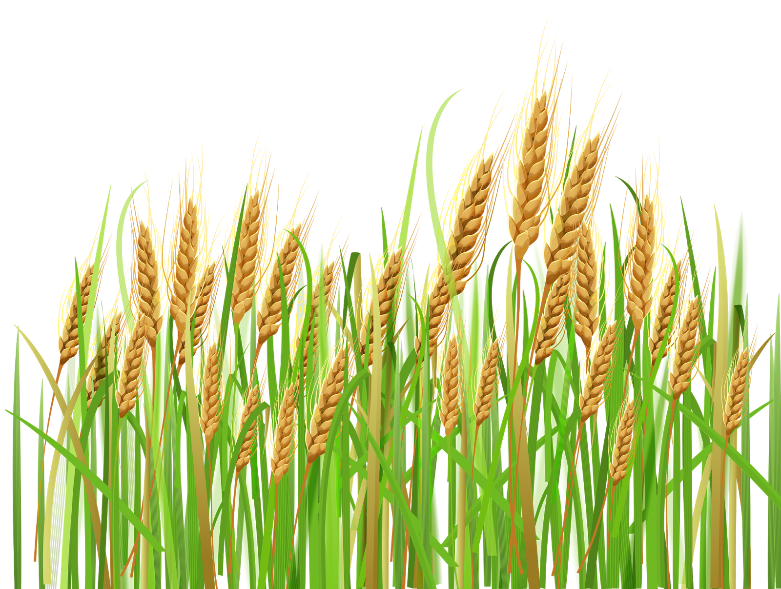 Clipart grass ryegrass. Barley prices closed higher