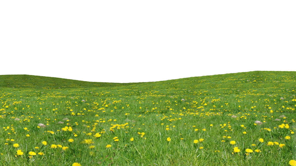 Flower field png. Grass transparent images all