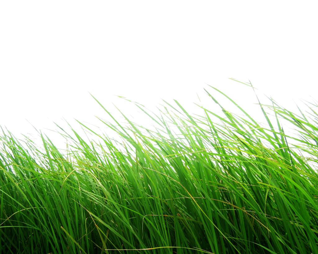 Clipart grass ryegrass. Png by moonglowlilly deviantart