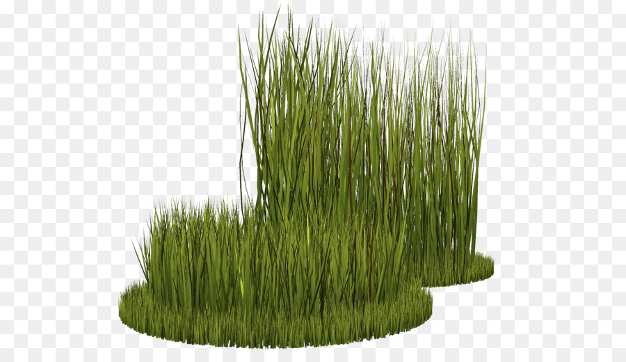 Clipart grass ryegrass. Family drawing