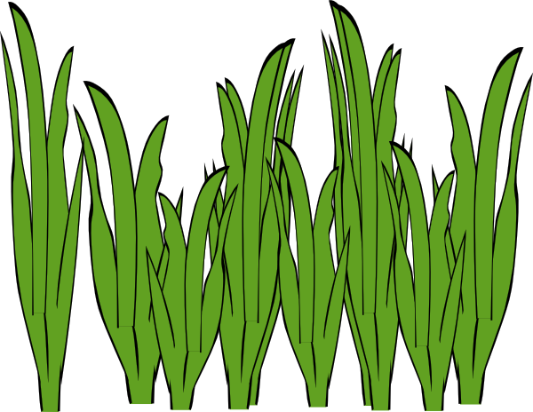 Seaweed Clip Art - ClipArt   Clipart Panda - Free Clipart Images
