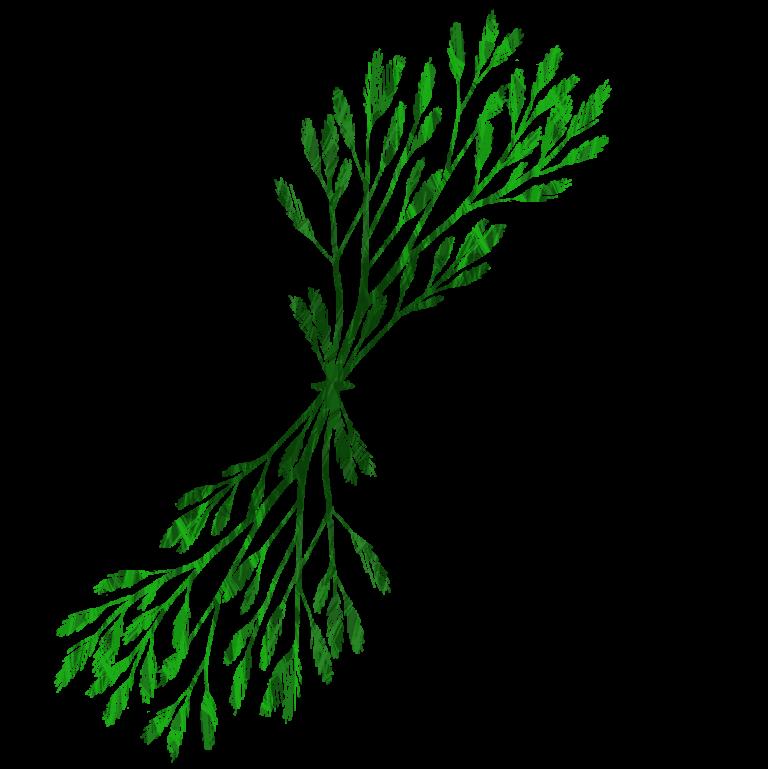 Clipart grass seaweed. Drawing clip art sea
