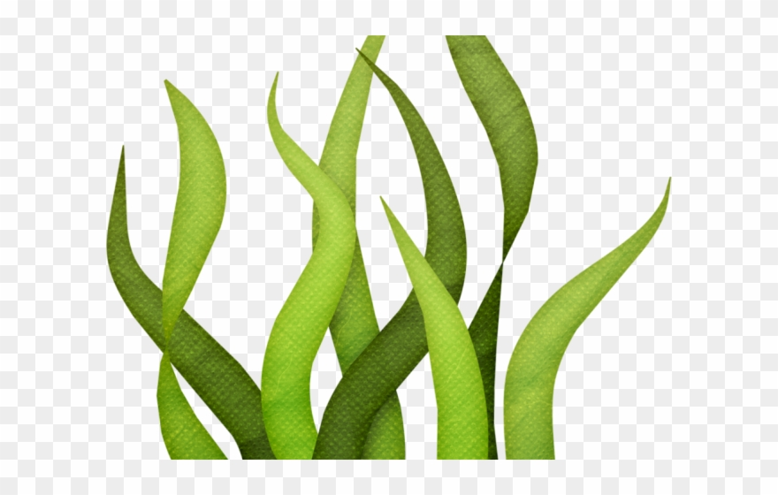 Clipart grass seaweed. Sea transparent png