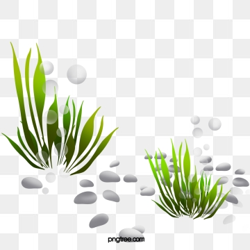 Png vector psd and. Clipart grass seaweed