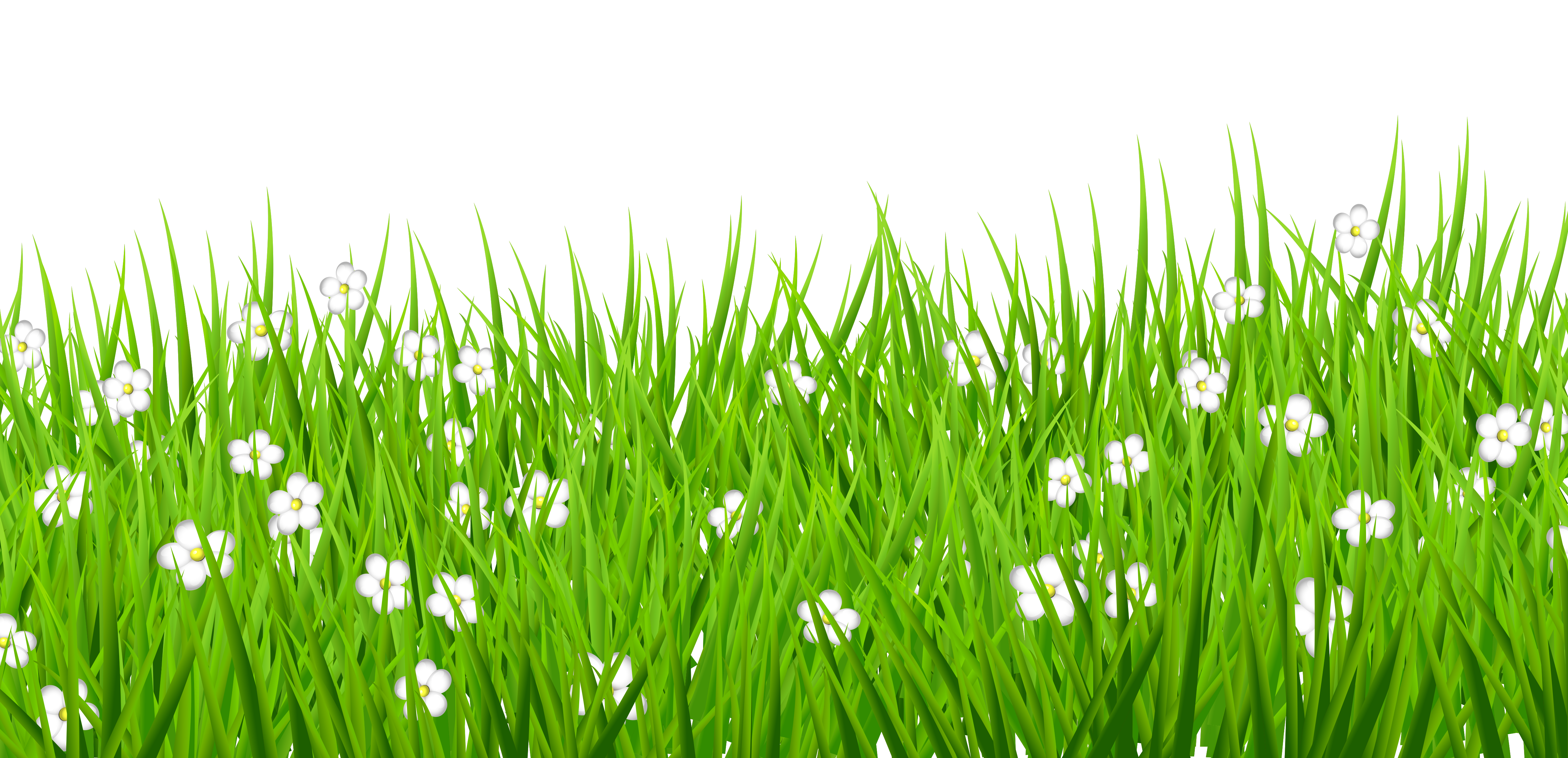Transparent with white flowers. Clipart grass shape