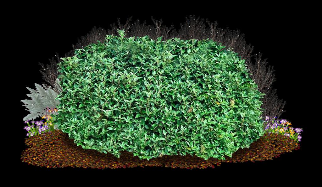 Grass clipart shrub. Bush png image purepng
