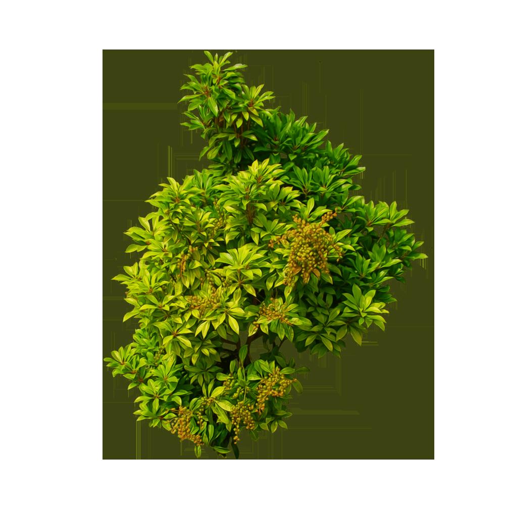 Tree clip art yellow. Clipart grass shrub