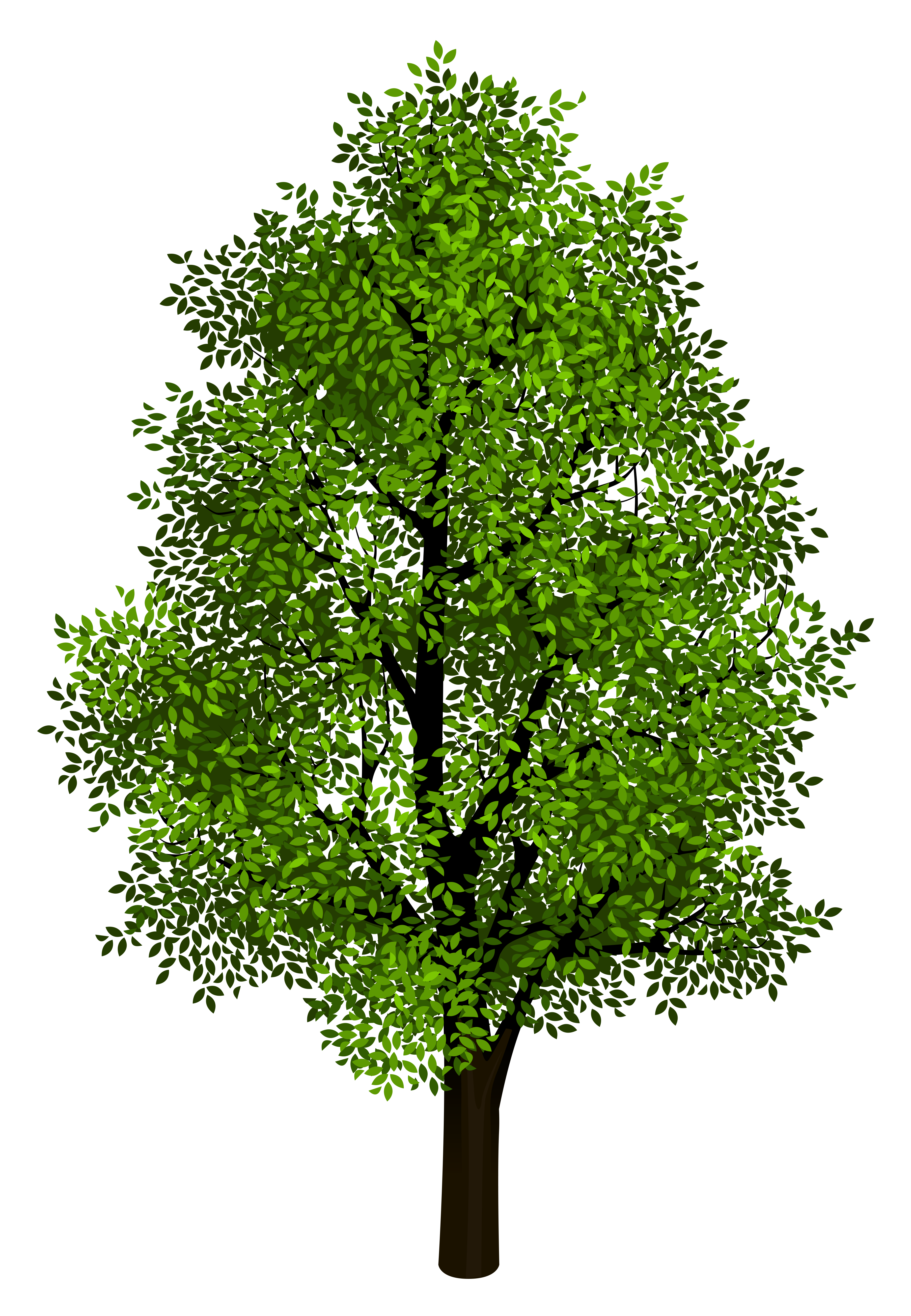 Green tree transparent picture. Grass clipart shrub