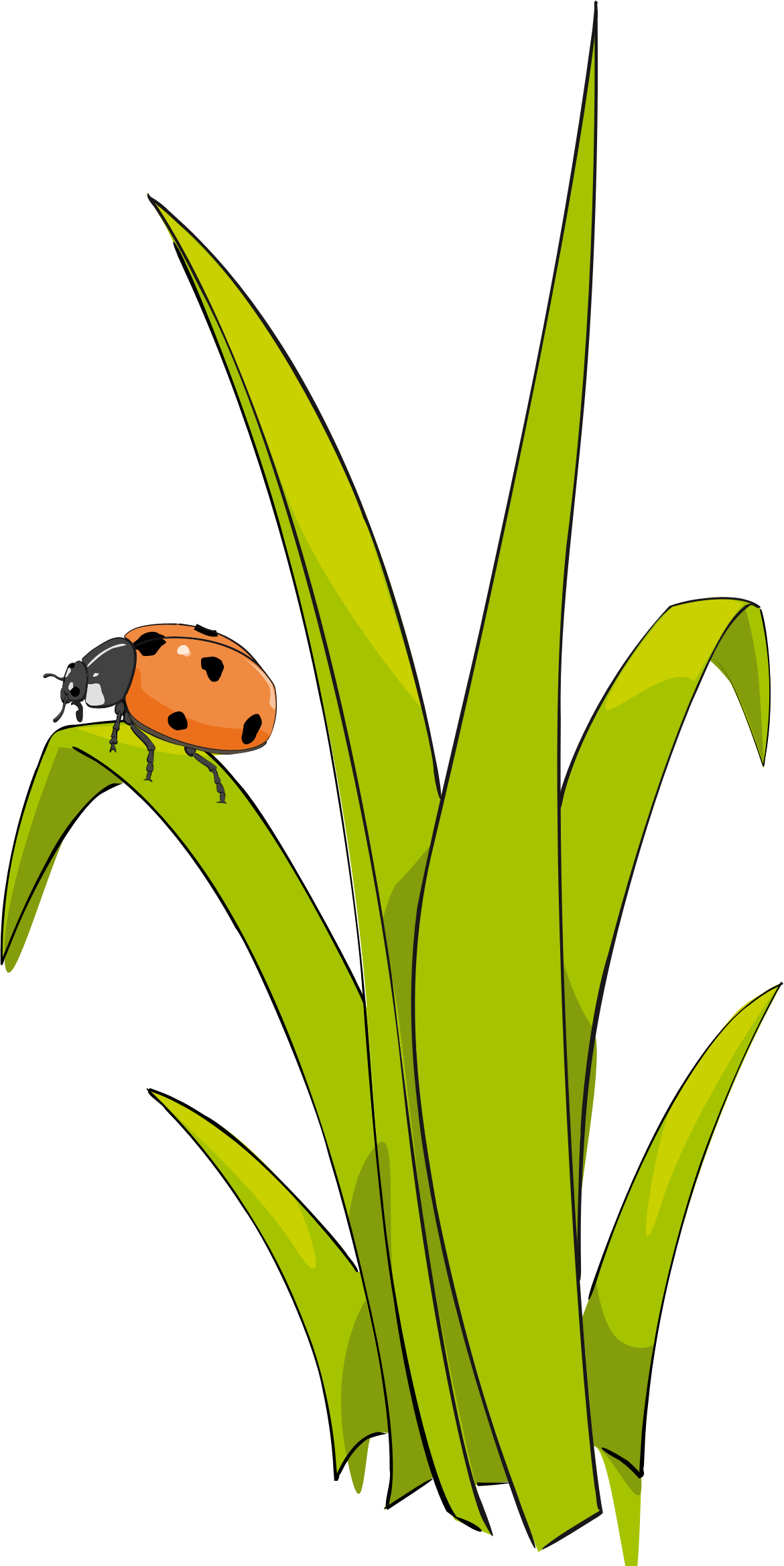 Clipart grass single.  collection of blades