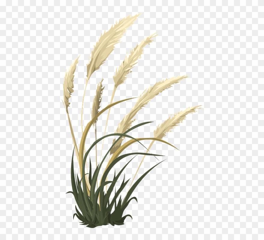 Clipart grass single. Pampas flower png pinclipart