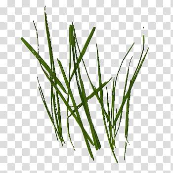 Nozzle green grasses transparent. Clipart grass single