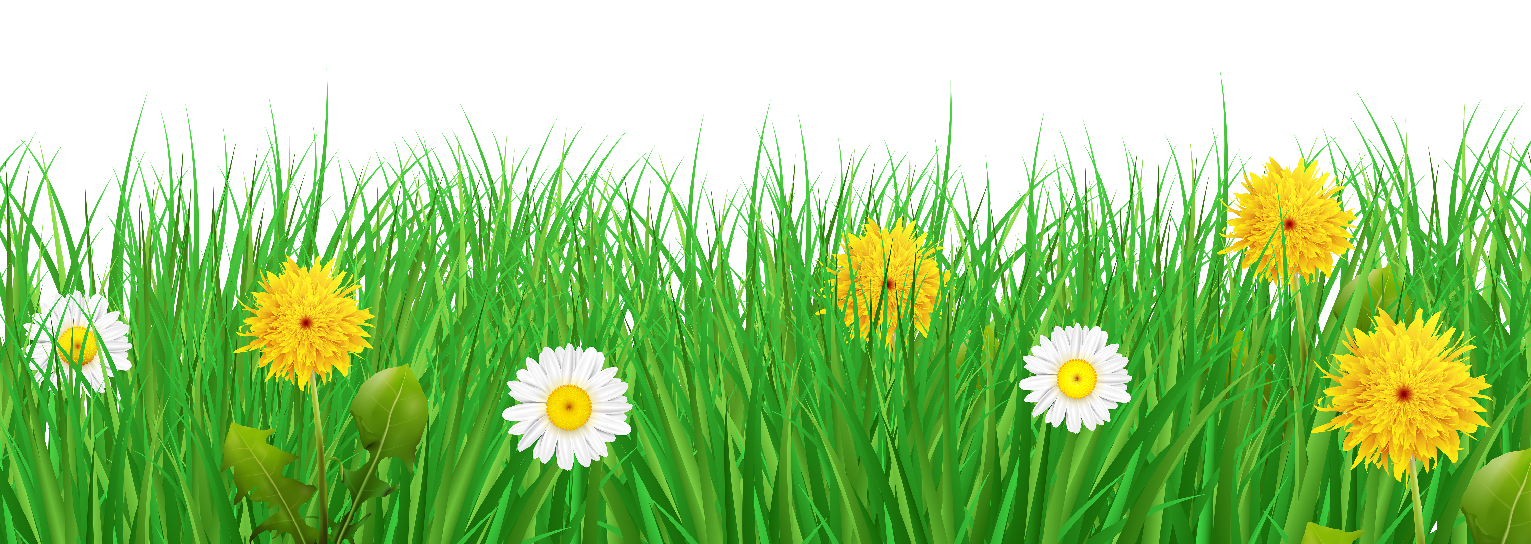 Clipart grass star. And flowers transparent png