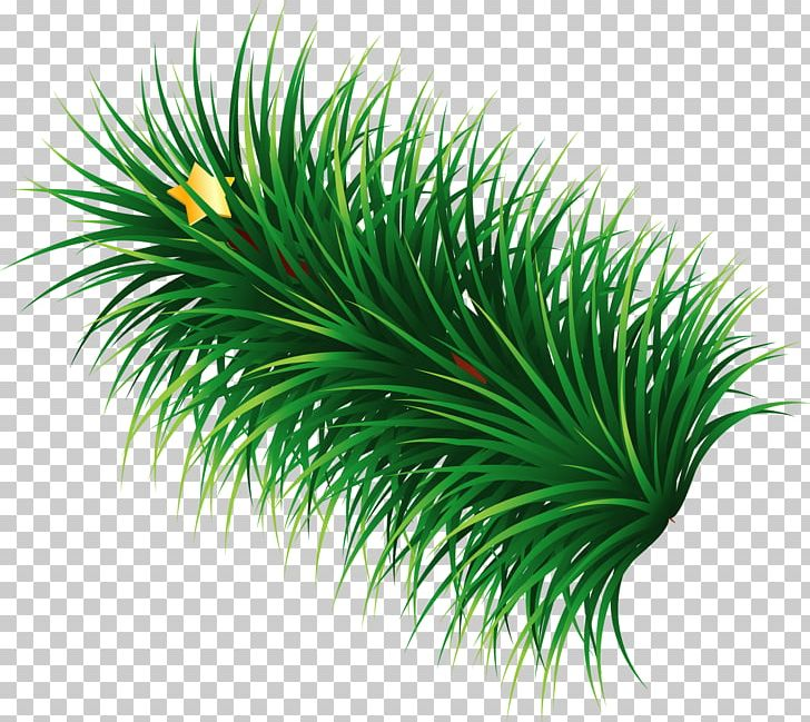 Hand painted green png. Clipart grass star