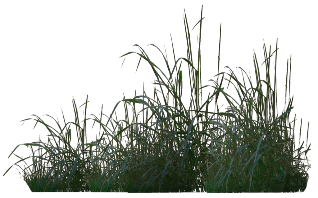 Rendered in poser pro. Clipart grass translucent