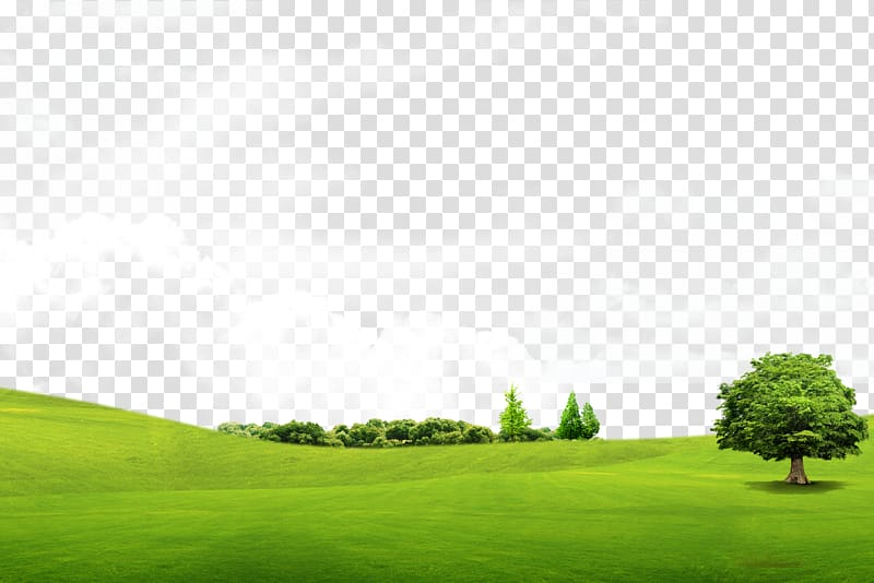 Clipart grass tree. Trees transparent background png