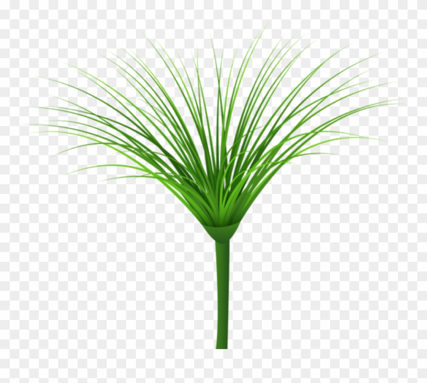 Download green leaf png. Clipart grass tropical grass