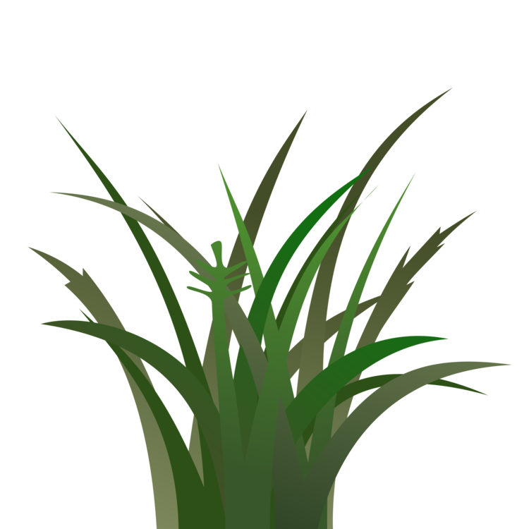 Clipart grass tropical grass. Plant leaf commodity png
