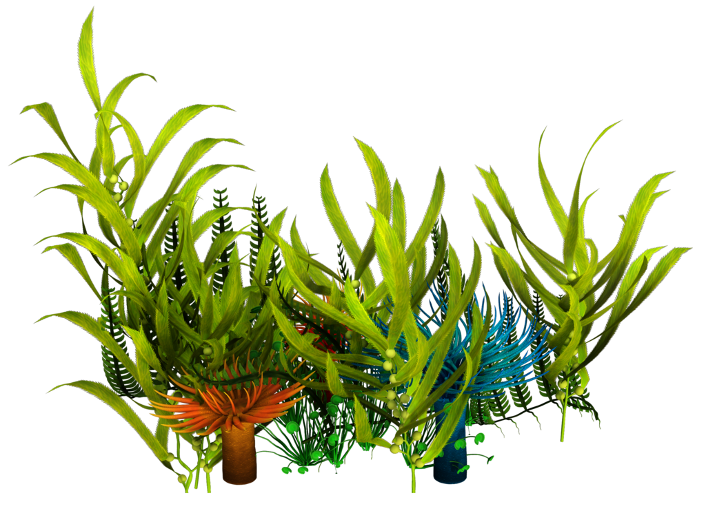 Plants clipart terrestrial plant. Underwater aquatic seaweed clip