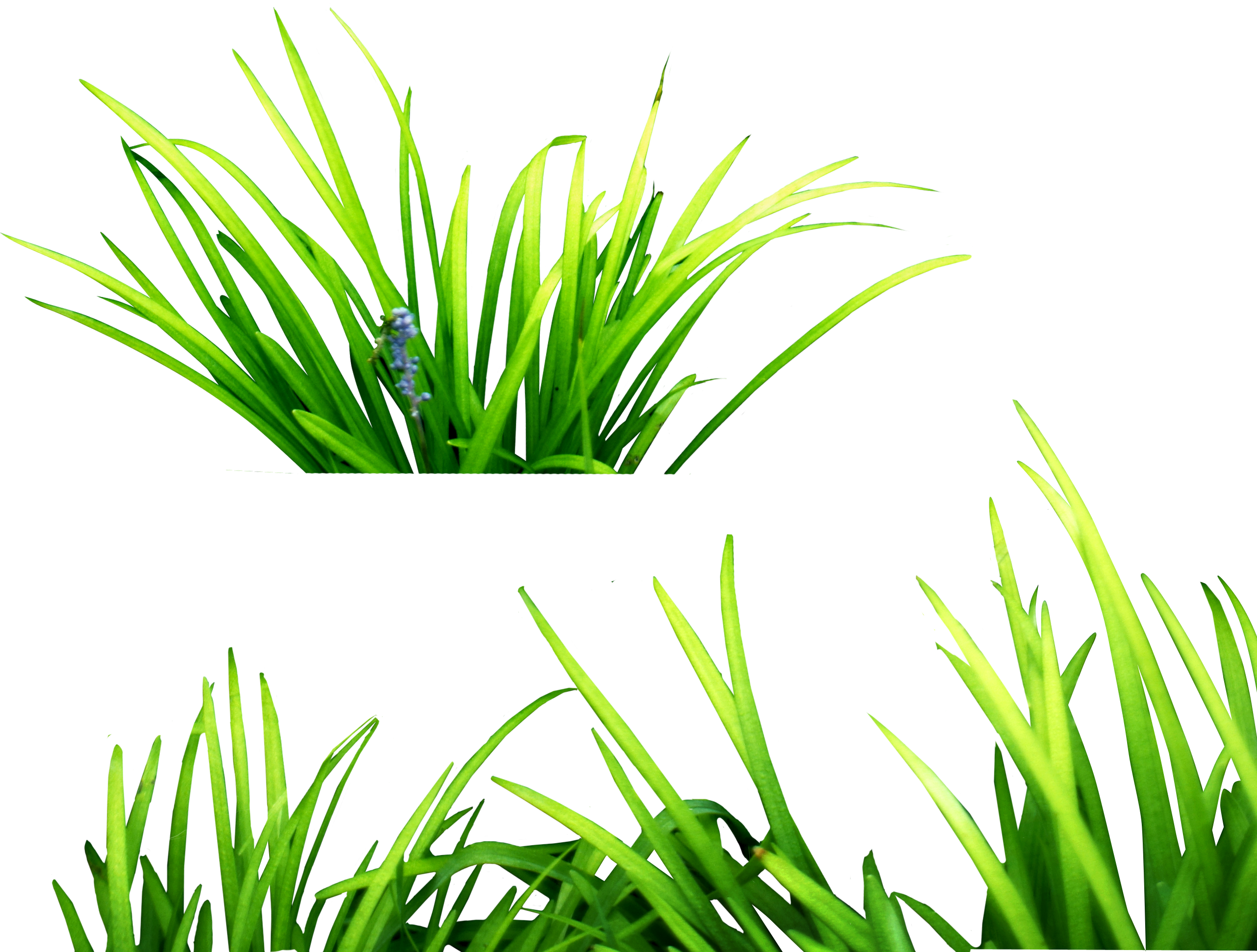 collection of high. Clipart grass underwater