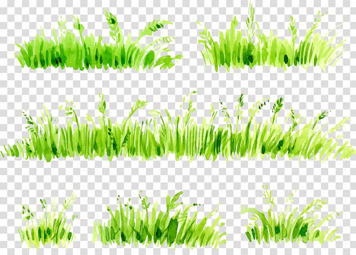 Grass clipart watercolor. Green leaf plant illustration