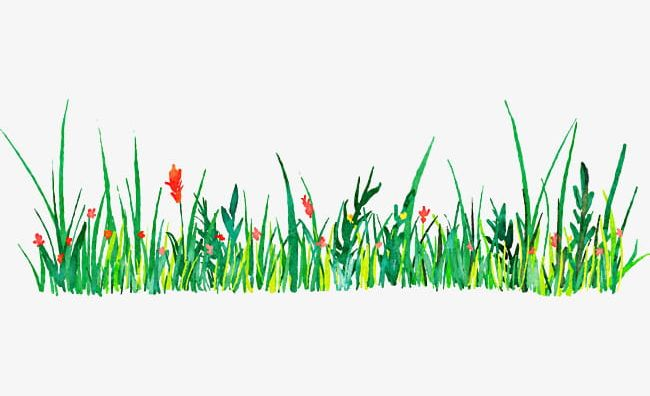Green decorative pattern png. Grass clipart watercolor