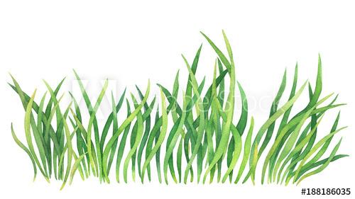 Drawn x free clip. Clipart grass watercolor