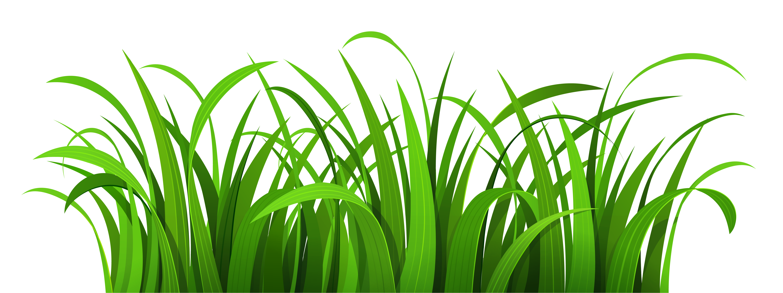 Free cliparts download clip. Clipart grass