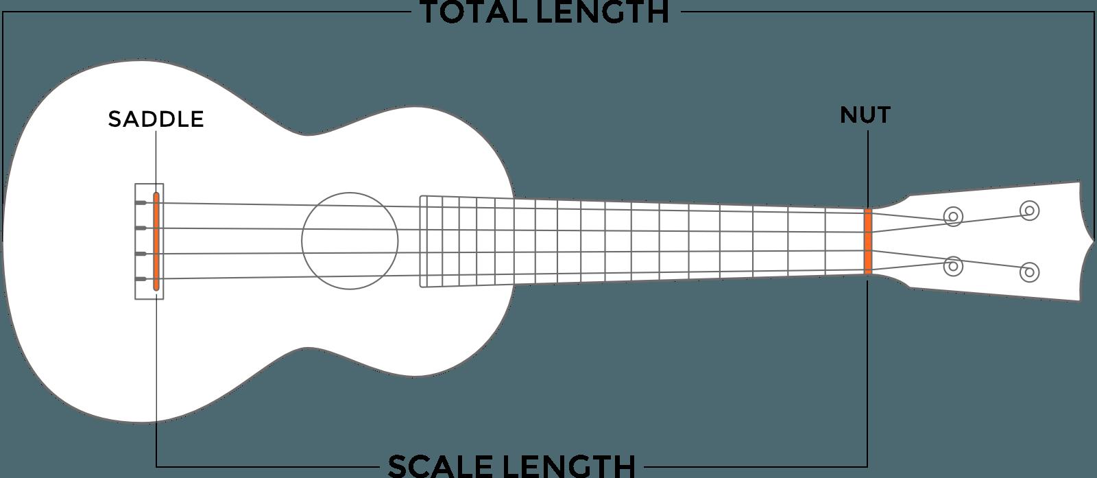 Clipart guitar ukelele. Ukuleles sizes whare are