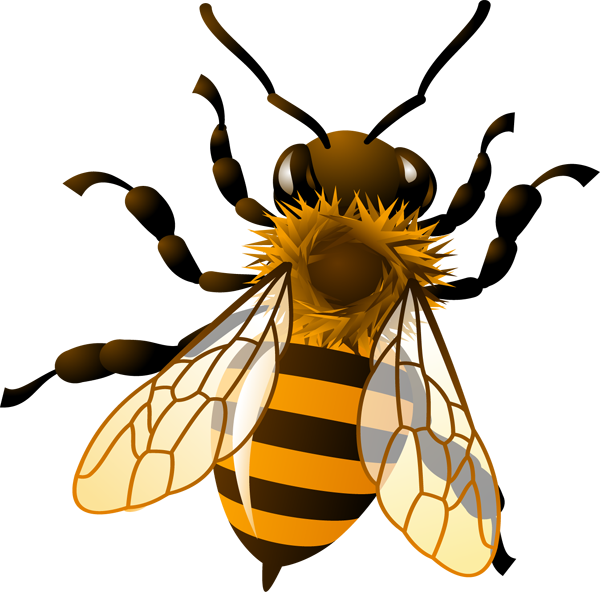 Queen clipart honeybee. Albanygacalendar com community sourced