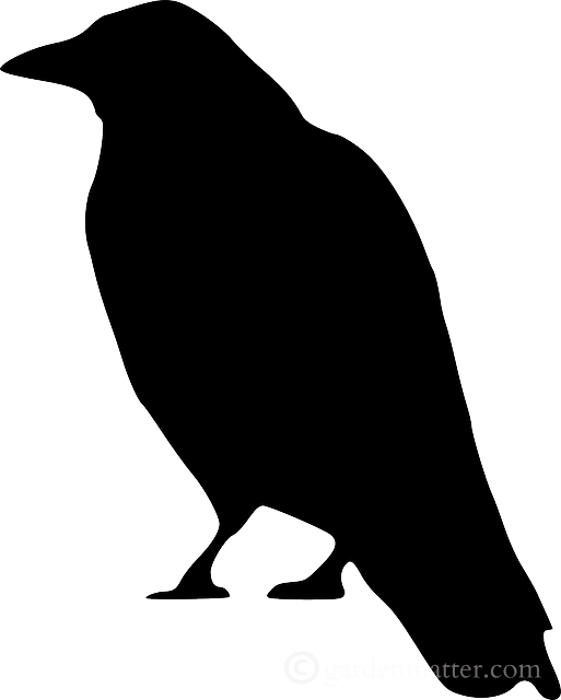 Scary silhouette for pinterest. Clipart halloween bird