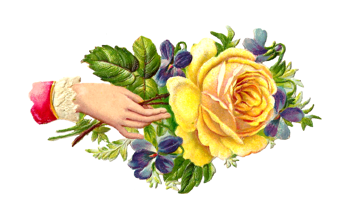 Antique images free graphic. Hands clipart flower