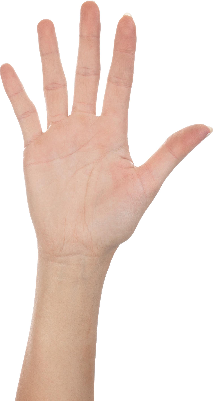 Five finger png image. Fingers clipart hand grab