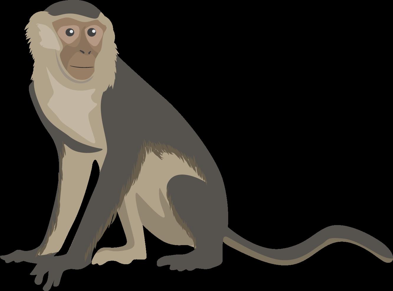 Monkey clipart capuchin monkey. Png transparent free images