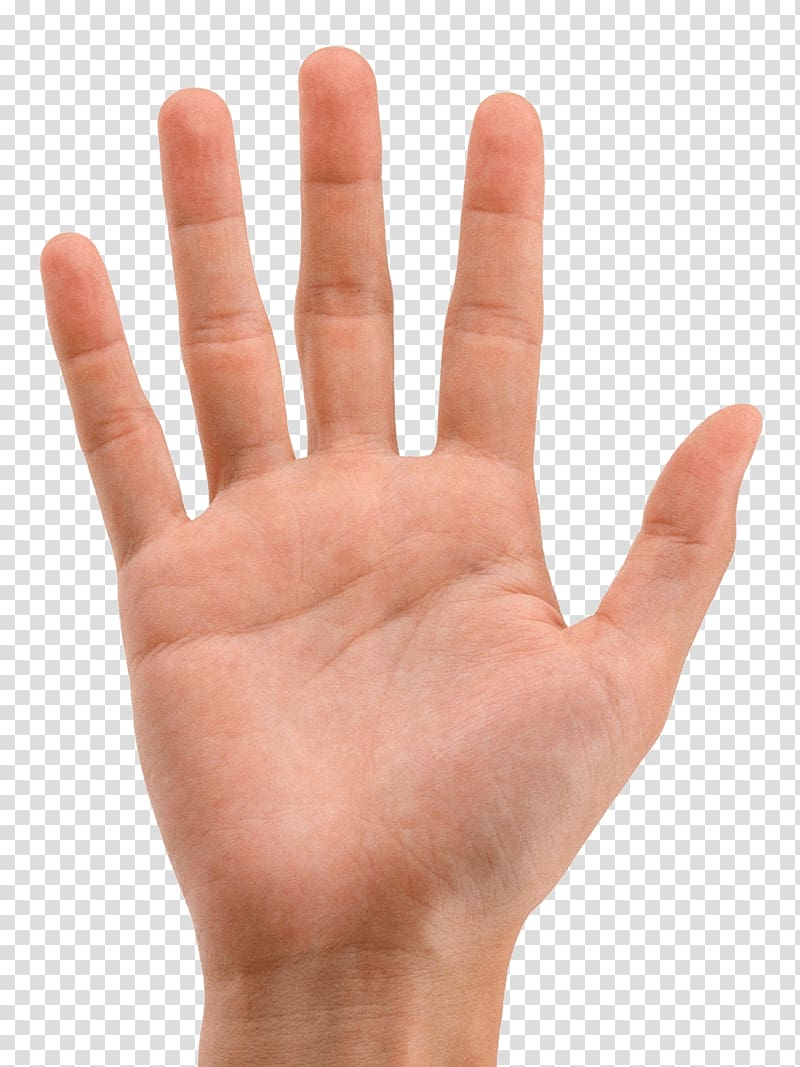 Clipart hands transparent background. Hand arecaceae icon png