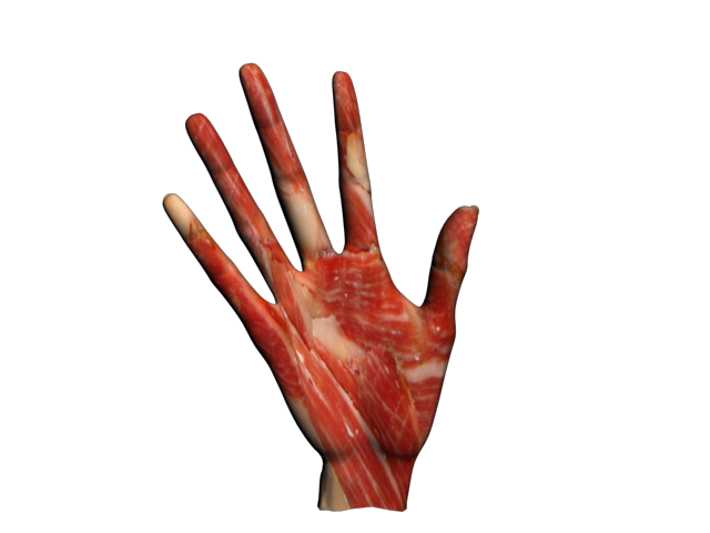 Zombie clipart hands. Hand by cherry on
