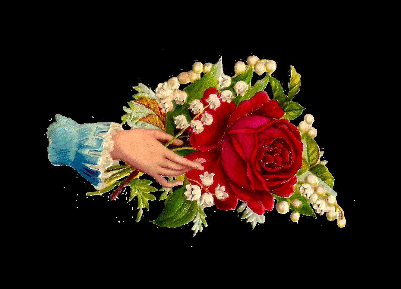 Clip art designs vector. Pear clipart rose