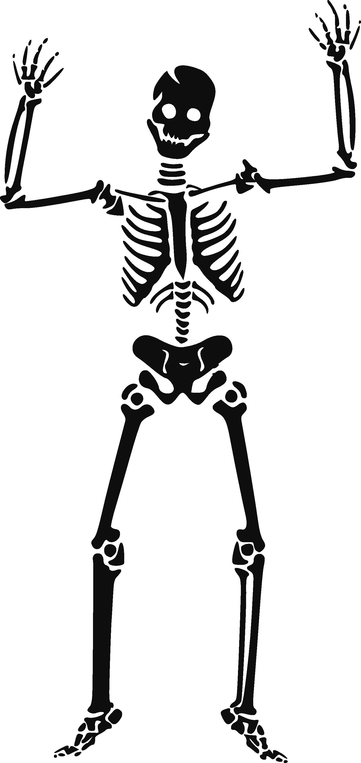 Hands clipart pencil. Bones biology science skeleton