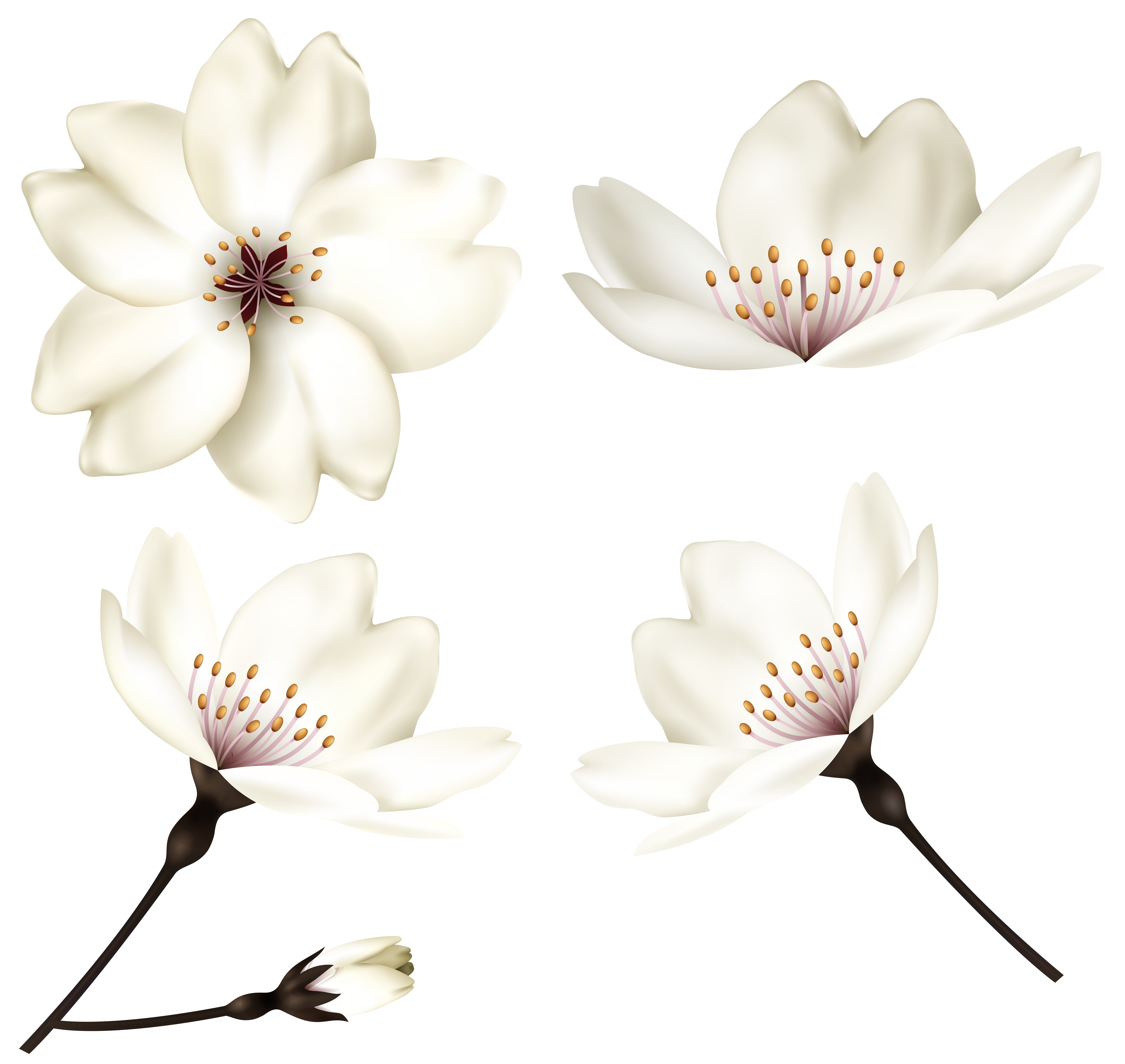 Flowers clip art image. Piano clipart spring